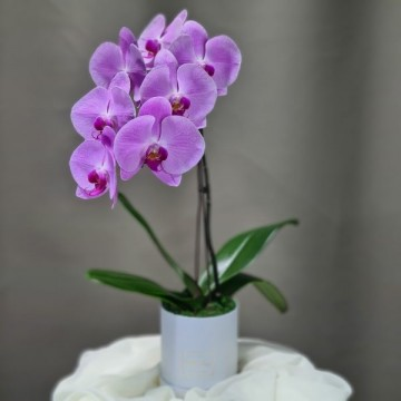 Petite Round Orchid Box