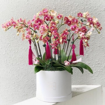 Deluxe Phalaenopsis Orchid Box