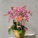 Special Phalaenopsis Orchid Vase
