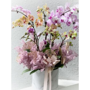 Special IWD orchid box