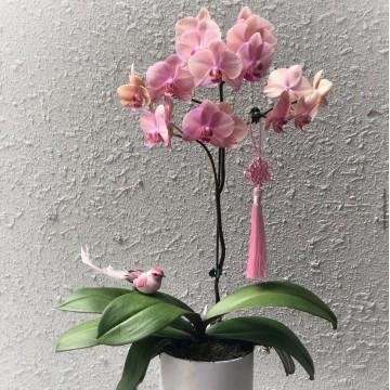 Petite Round Orchid Box