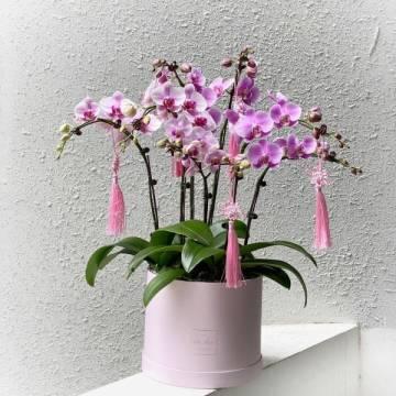 Mid Autumn Festival Orchid Box