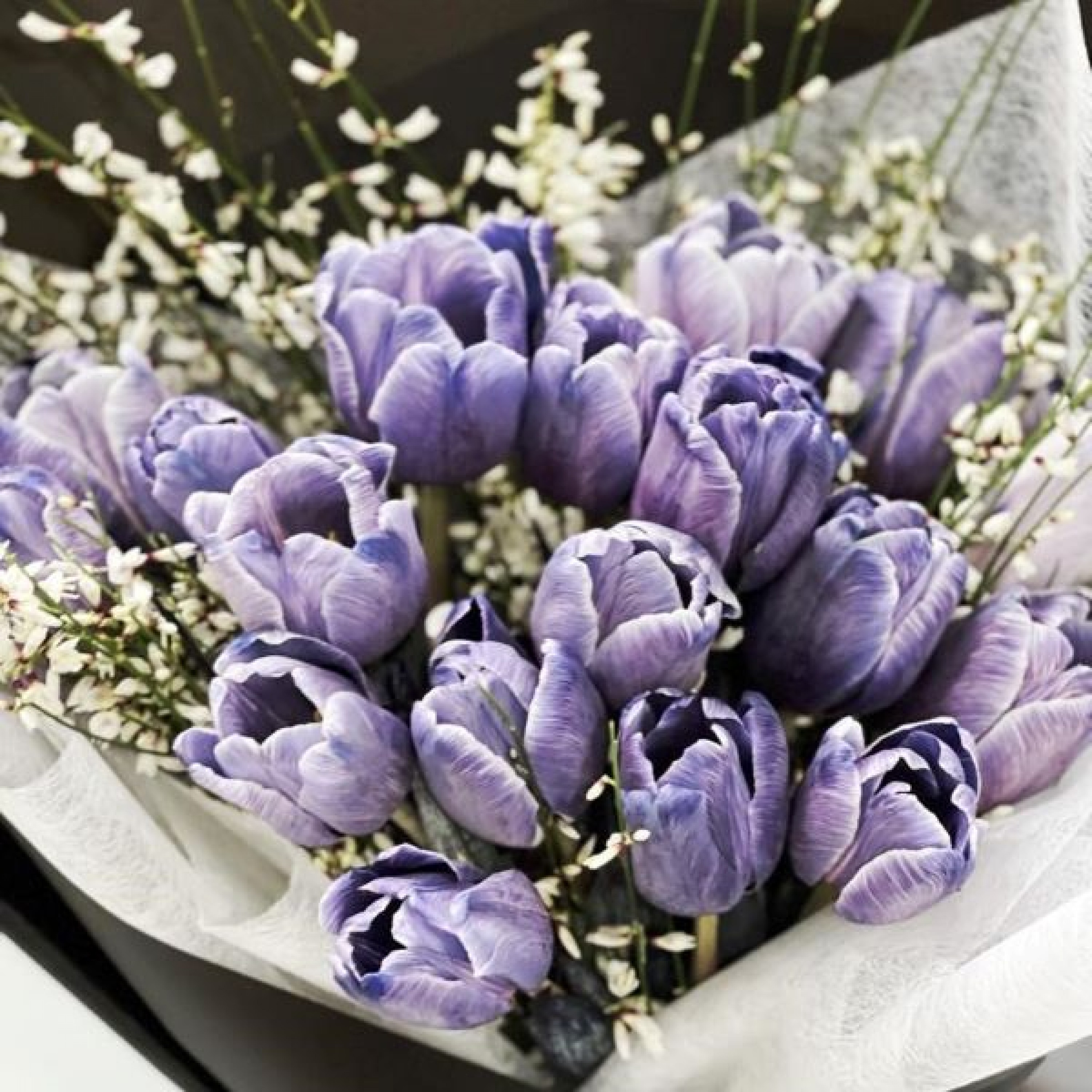 Lavender Magic Tulips