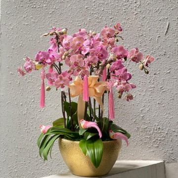Special Phalaenopsis Orchid Vase