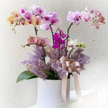 Special orchid box